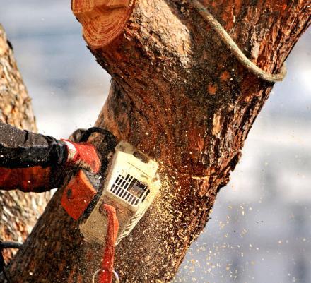 Abattage d'arbres Honfleur